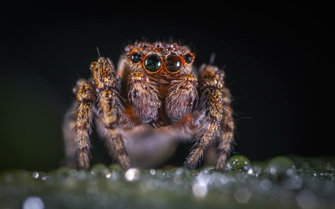 What Is Anatidaephobia & How to Cope With It?